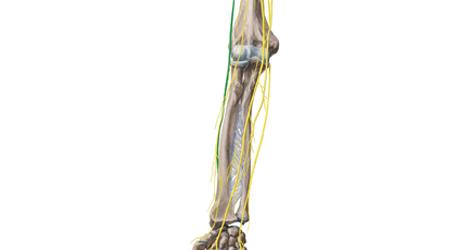 Treatment-Nerve-Gliding-Technique-2